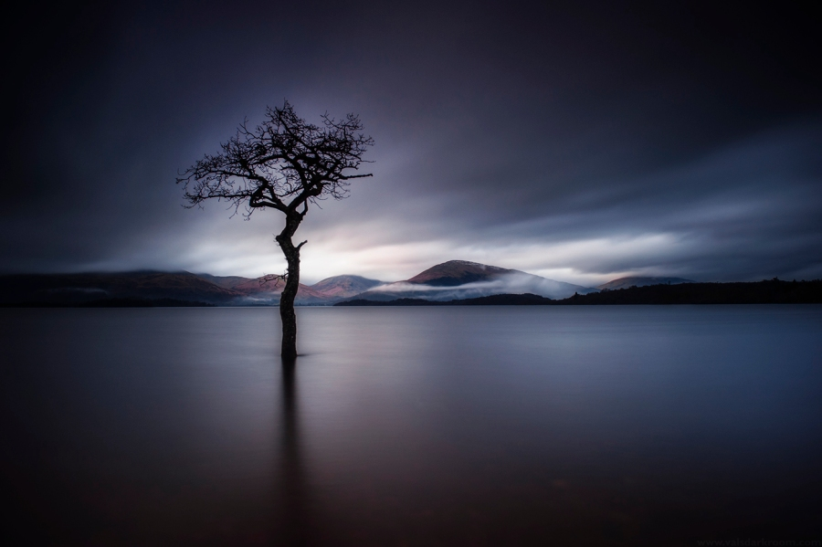 The Loney Tree at Milarrochy Bay, Loch Lomond